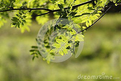 Green leafs in the sun