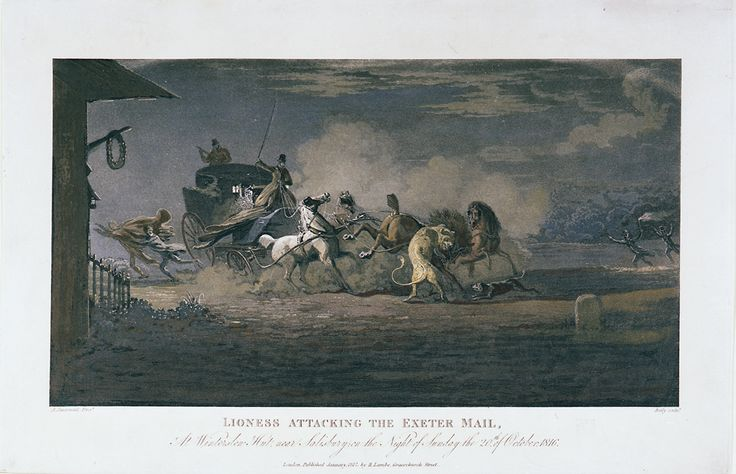 'Lioness Attacking the Exeter Mail, At Winterston Hut near Salisbury, on the Night of Sunday the 20th of October, 1816' - colour engraved print by A Sauerweid, 1817 (2009-0024)