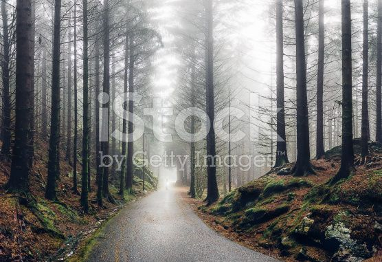 Norwegian forest in fog royalty-free stock photo