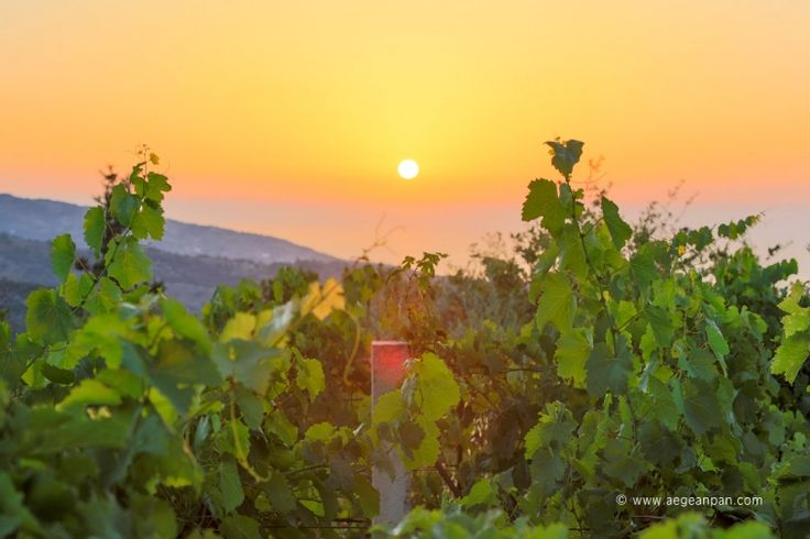 Sunset view from an Ikarian vineyard