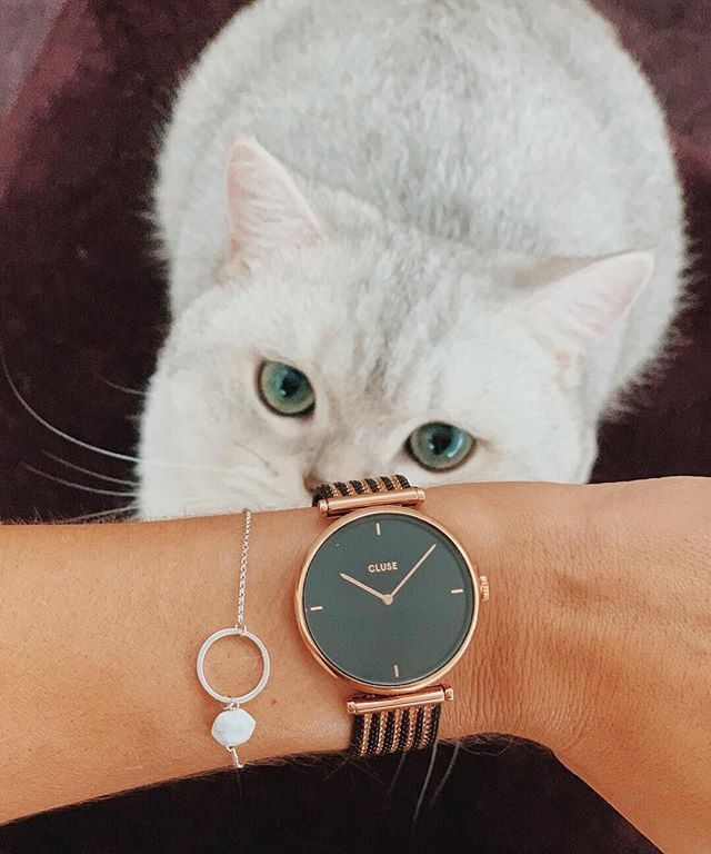 How cute is this fluffy white cat with her eyes on our new Triomphe mesh  black  gold  Our Triomphe collection merges classic glamour with an  intriguing ... 354789f6034