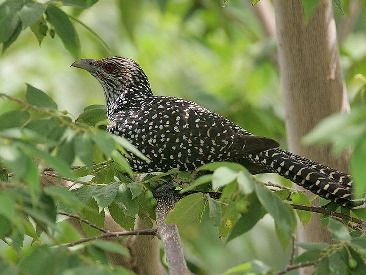 Ballabhpur Wildlife Sanctuary - in West Bengal, India