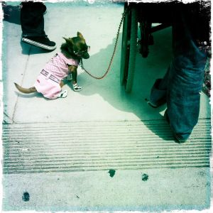 nspirelife | Even dogs dress up for Rodeo Drive, crazy LA