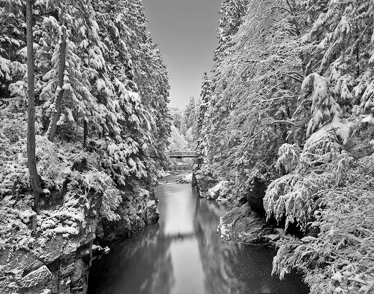 Capilano river winter scene with snow on trees | Lawrence Hislop Photography