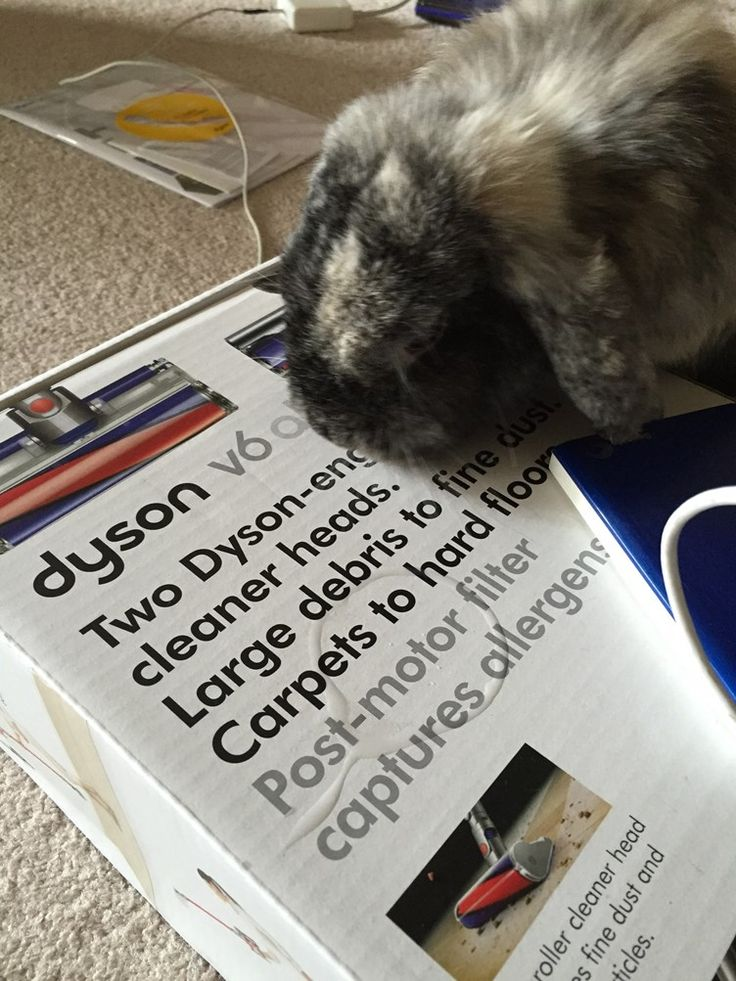 Review of the Dyson V6 cordless vacuum - it sucks dust bunnies but not your real ones! A useful newlywed gift for the home.