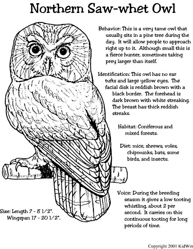 89 best doodling birds