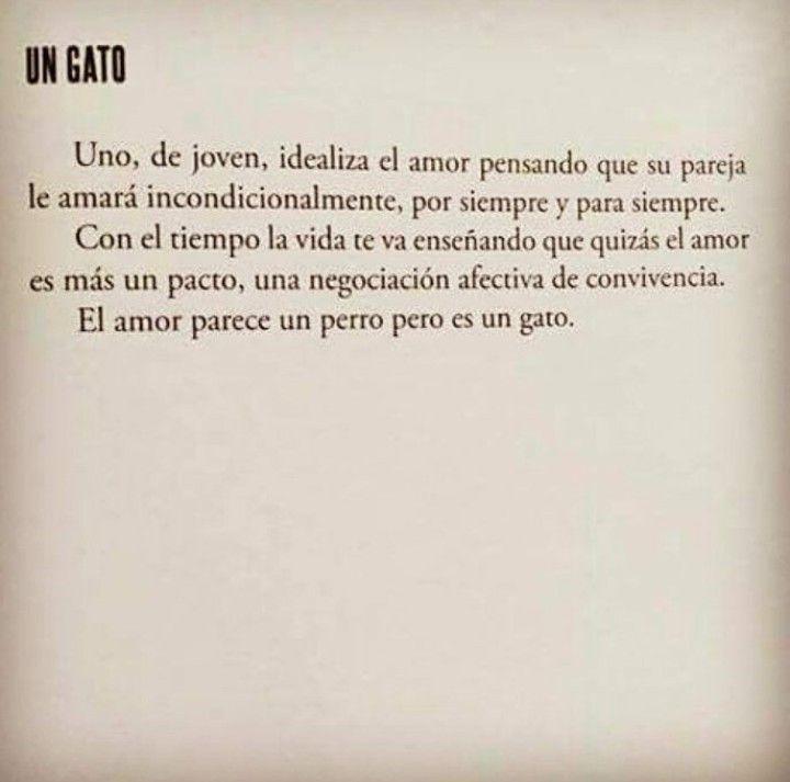 El amor es un gato