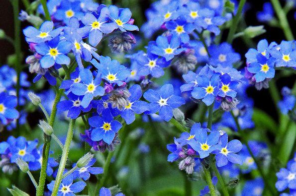 V tomto článku najdete obrázky nejrůznějšího modrého kvítí i tipy na výběr vhodných rostlinek - pro případ, že byste si rádi zamodřili zahradu :-)
