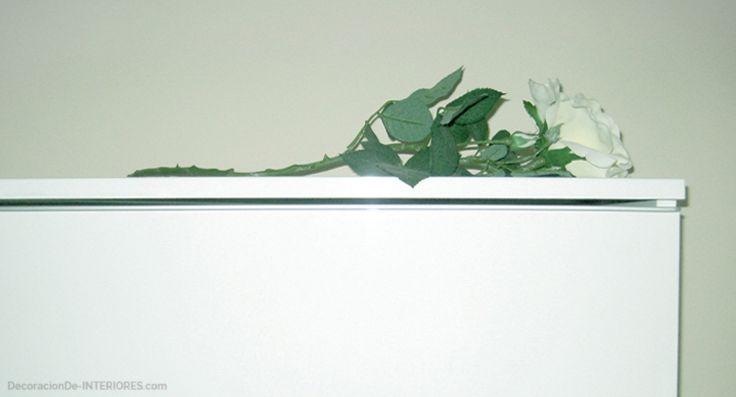 Rosa blanca | Las plantas artificiales | DecoracionDe-INTERIORES.com