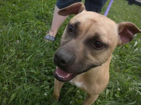 Kentucky Dog Rescue Transport