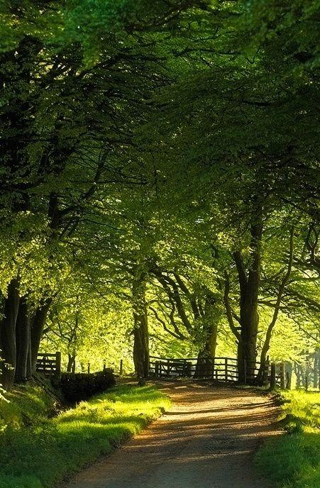 Summer Country Lane