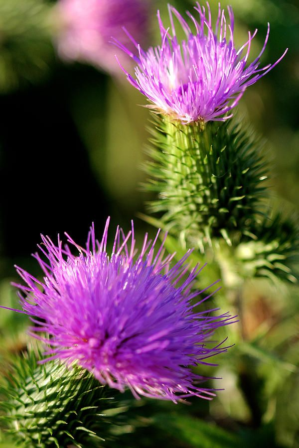 Cactus Flower Photograph  -