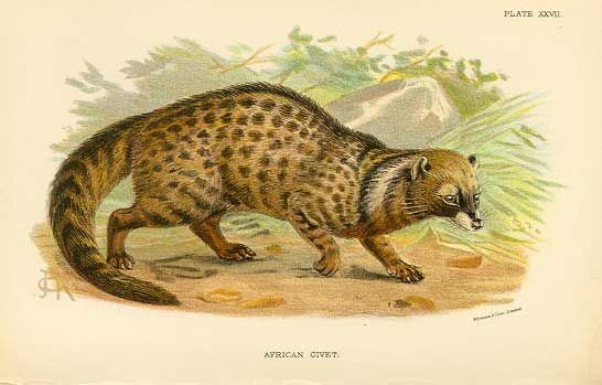 Is there a civet in your perfume?