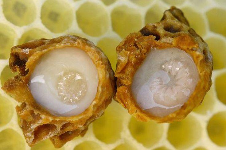 Les habitants de la ruche: la Reine · Des Goûts et des COULEURS