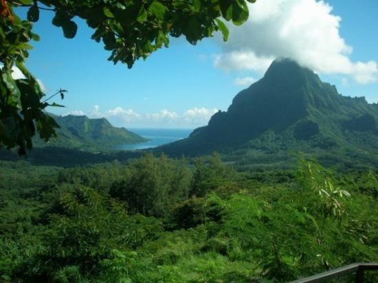 french polynesia singles Buy lifetime journeys: explore french polynesia: tahiti and moorea: read 2 books reviews - amazoncom.