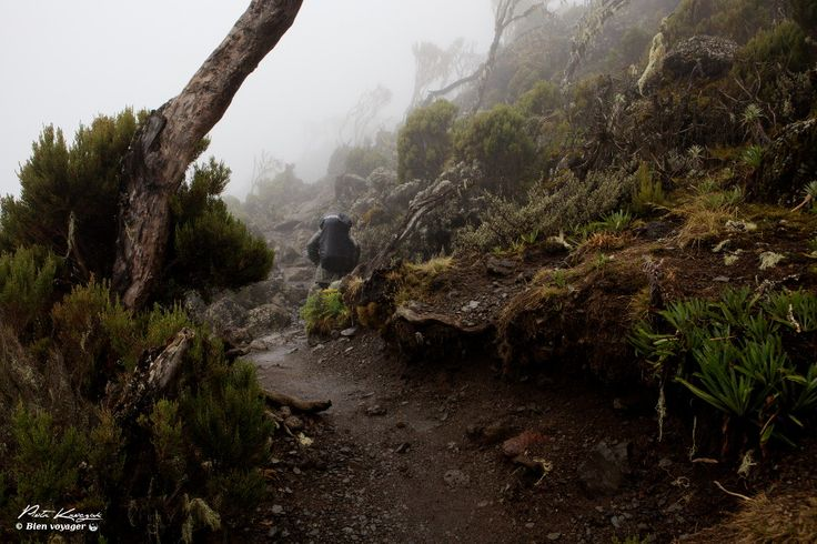 Kilimandjaro marcheme 2article
