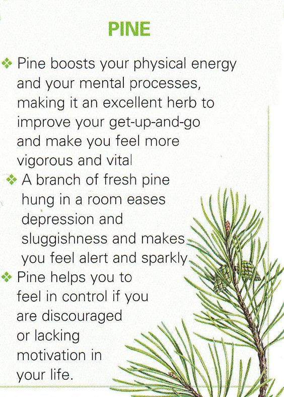 i think i need to just live in a damned pine forest!!