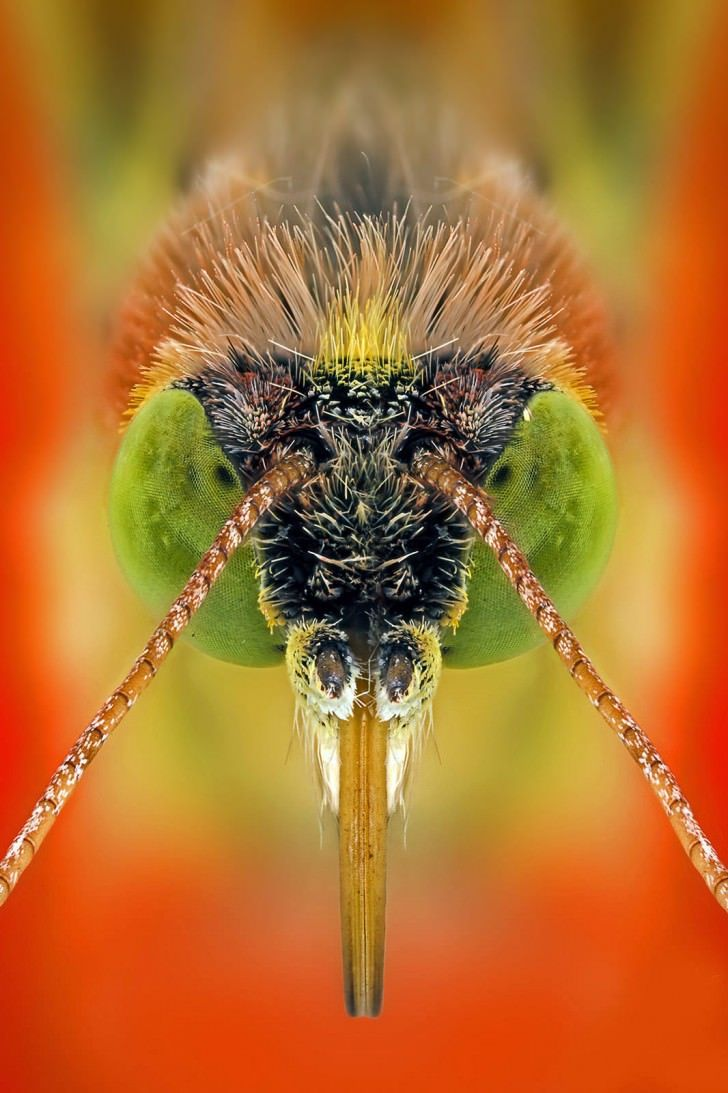 Macro Photography Portraits Of Insects By Paulo Latães