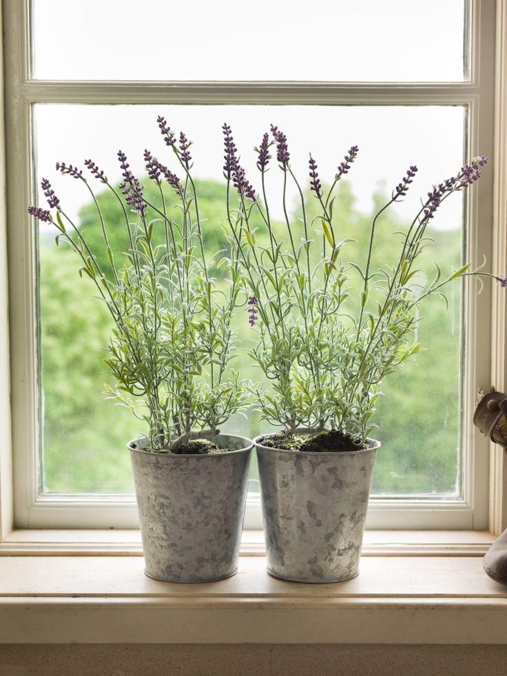 Lavender pots