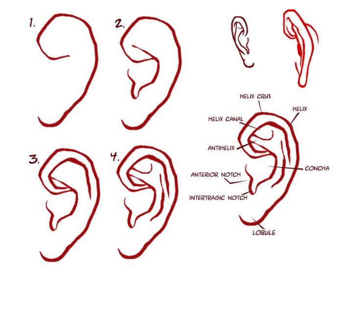 Character Design Challenge Facebook : Best images about character anatomy ears on pinterest
