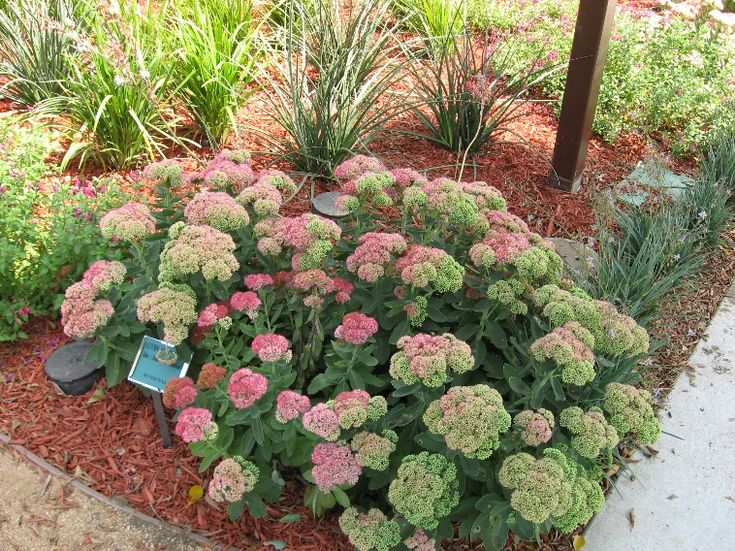 Best 10 Drought Resistant Landscaping Ideas On Pinterest - drought tolerant garden design ideas