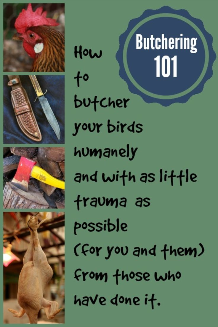 It may not be the BEST farm task, but when it needs to be done, these tips will come in handy. http://www.attainable-sustainable.net/butchering-chickens/