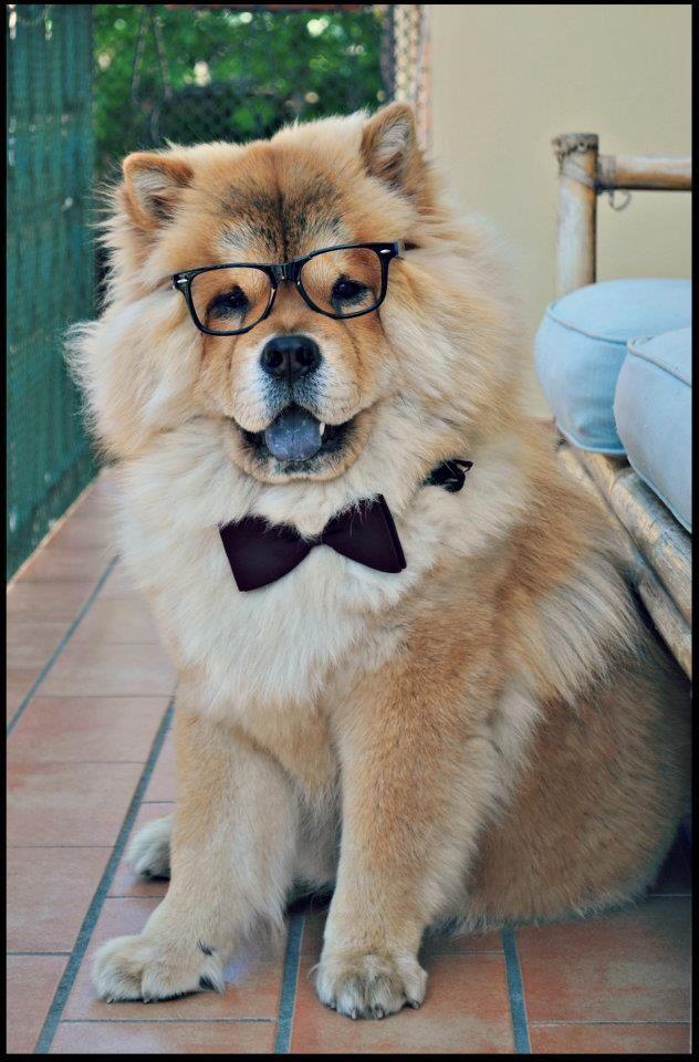 Smart dogs #Cute #Doge