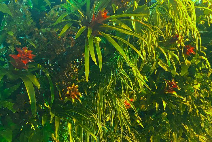 Atmosphy Green Wall www.atmosphy.com #greenwall #plants #verticalgarden
