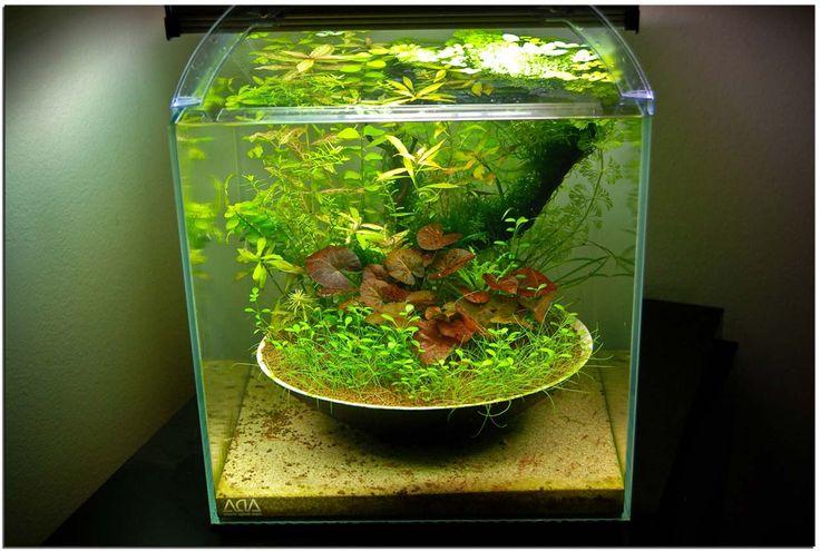 Small Aquarium Decoration Design Ideas ~ http://www.lookmyhomes.com/creative-aquarium-decoration-ideas/