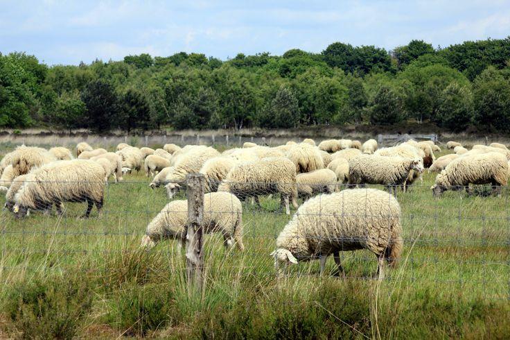 Rondom boerderij Mossel, Ottterloo