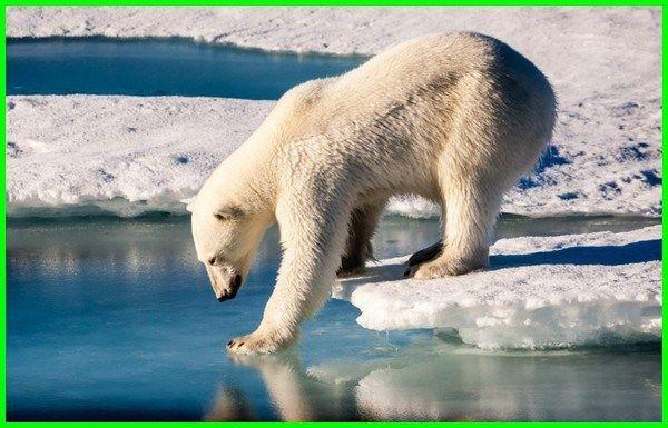 20 Pertanyaan Dan Jawaban Seputar Beruang Hewan Binatang Dan Dunia