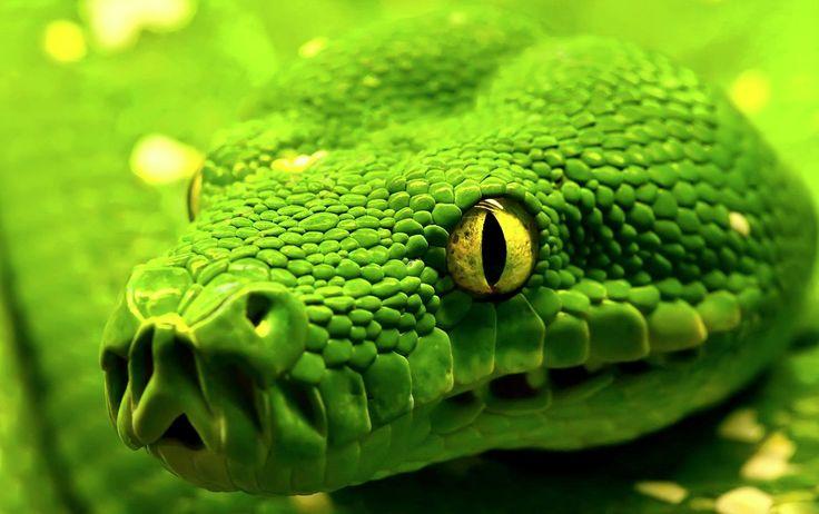 vería si fuera una... serpiente? Por los ojos y por