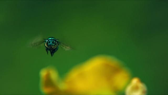 Possibly the most beautiful video I have ever watched!! (Louie Schwartzberg: The hidden beauty of pollination)