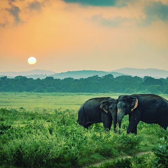 Elefantensafari Sri Lanka #Reise #Srilanka #Colombo #Ceylon #Exploresrilanka    – vacation