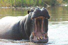 Moremi Game Reserve. #Botswana  http://www.gunns-camp.com/