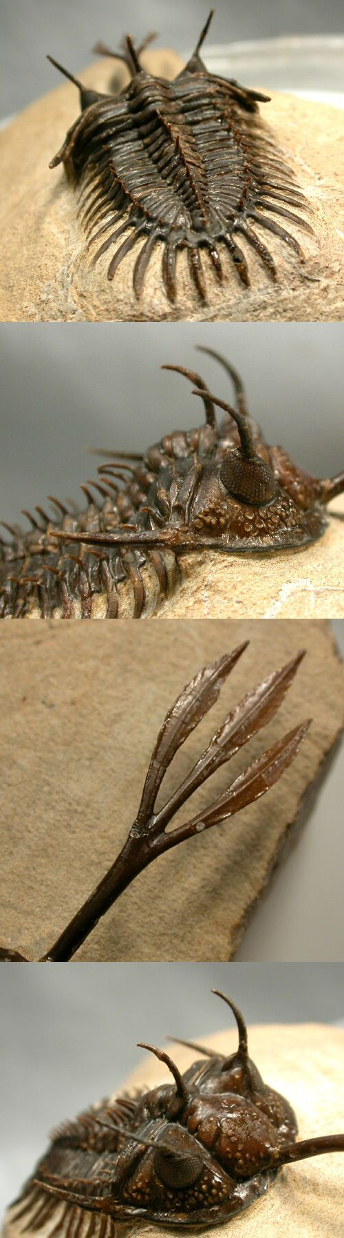 I want such a trilobite :)