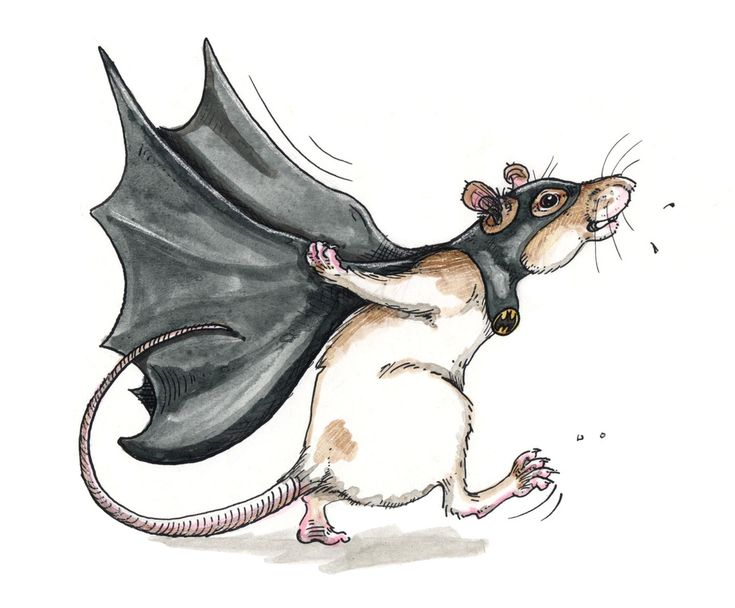 Открытка, крыса смешная картинка нарисованная