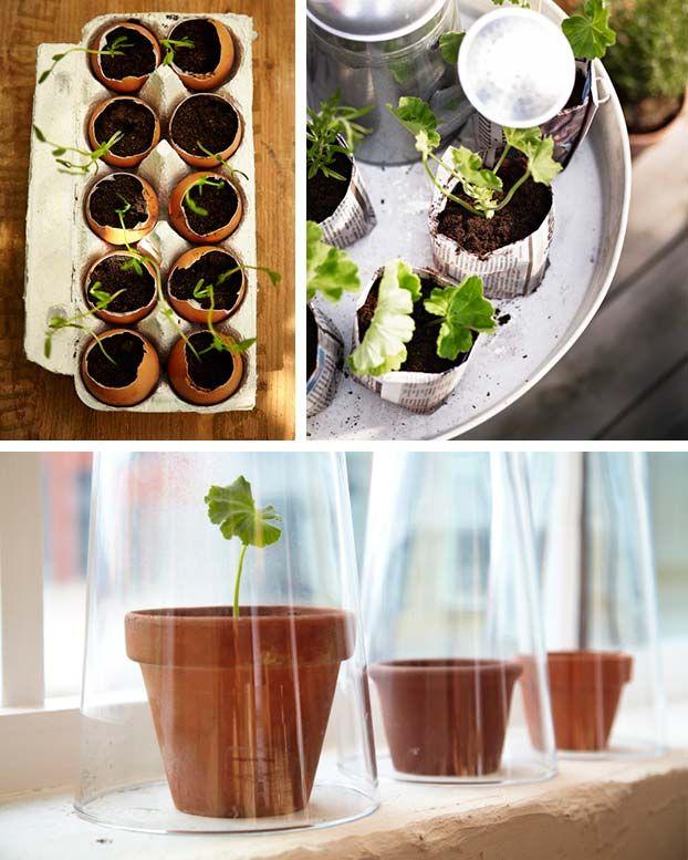 Jeśli nie dospecjalnych plastikowych kuwet lub miniaturowych doniczek, toposiej rośliny dotakich pojemników, jakie akurat masz podręką. Mogą tobyć nawet zwyczajne wytłoczki najajka, lub skorupki odjaj. Najprostsze szklarnie topo prostu szklane klosze, którymi nakrywamy rośliny.