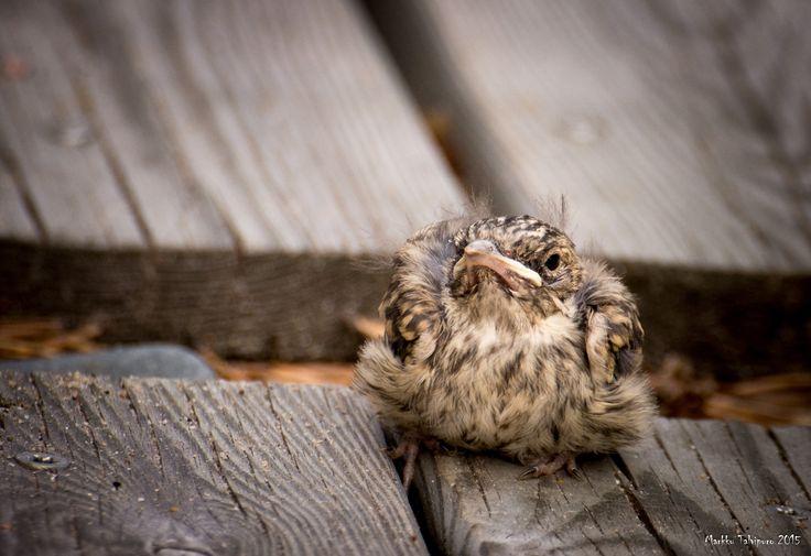 Little bird by Markku Talvipuro on 500px