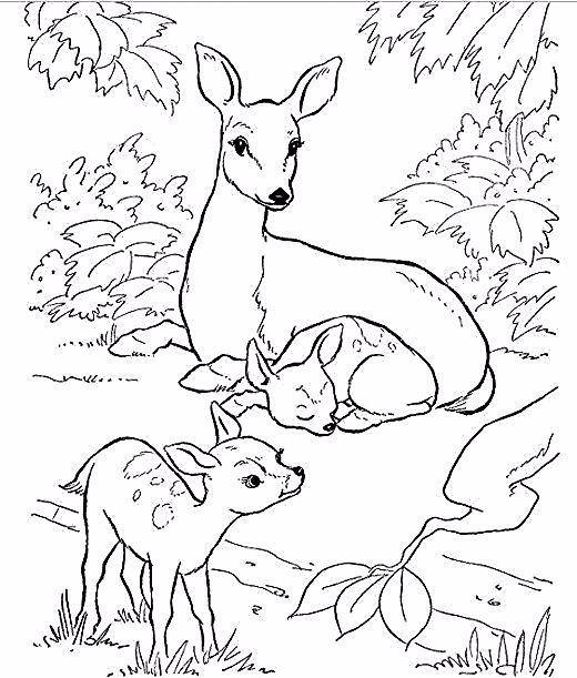 Hinterhof Tiere Und Natur Malbucher Kostenlos Malvorlagen Hinterhof Kost Kostenlose Ausmalbilder Kostenlose Malvorlagen Malvorlagen