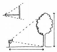 ONF - Calculer la hauteur d'un arbre : animation