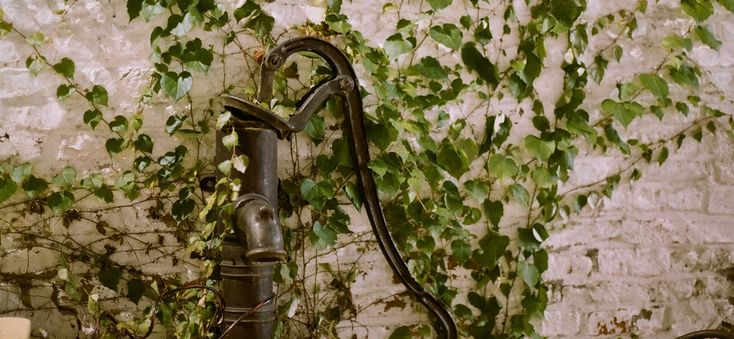 Treatment for Poison Ivy Rash - http://incrediblefitnesstips.com/treatment-for-poison-ivy-rash/