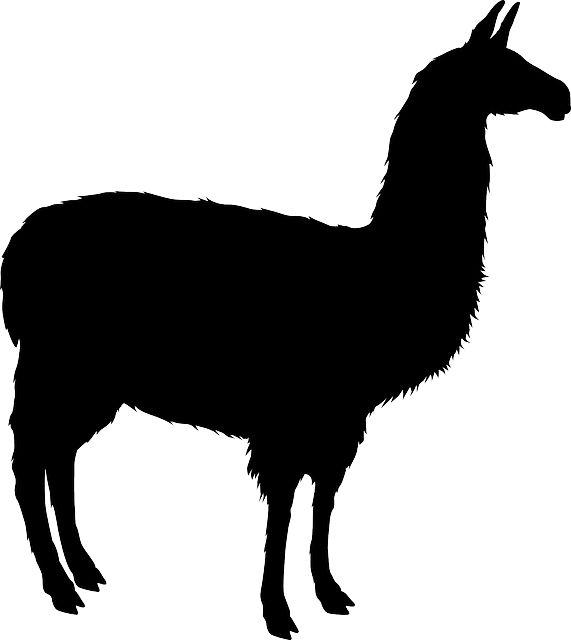 Llama, Alpaca, Animal, Mammal, Zoo, Silhouette, Black