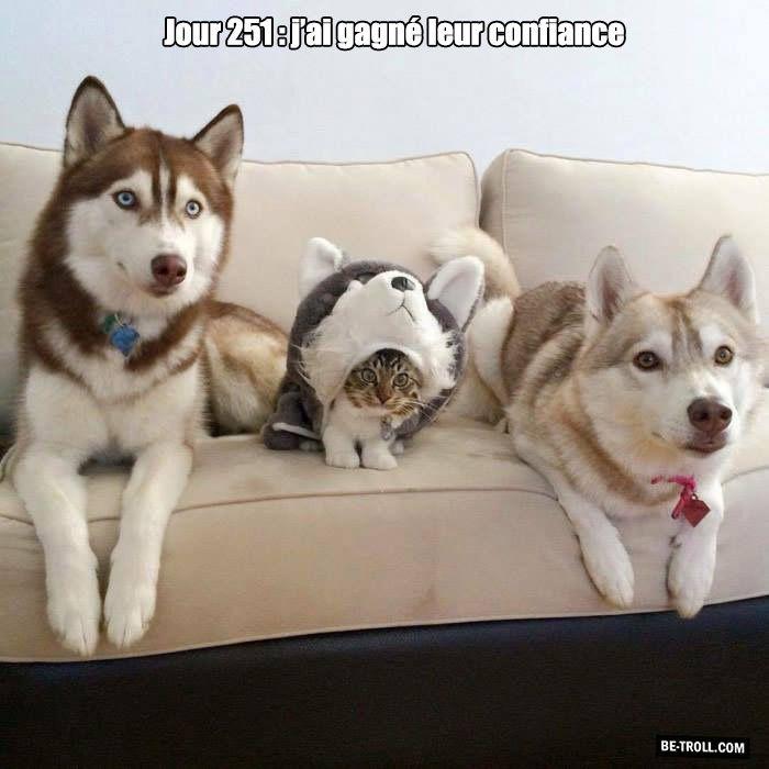 Jour 251, j'ai gagné leur confiance...