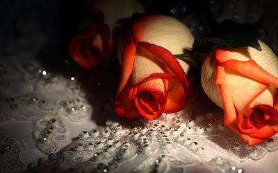 25 fotos de rosas rojas, arreglos florales y postales para el Día del Amor y la Amistad. - Happy Valentine's Day   Banco de Imágenes Gratis 25 fotos de rosas rojas, arreglos florales y postales para el Día del Amor y la Amistad. - Happy Valentine's Day                    Banco de Imágenes Gratis