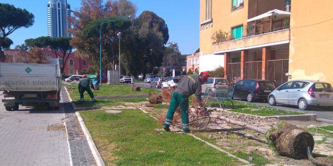 Latina: Viale Italia, al via la piantumazione degli aceri platanoidi