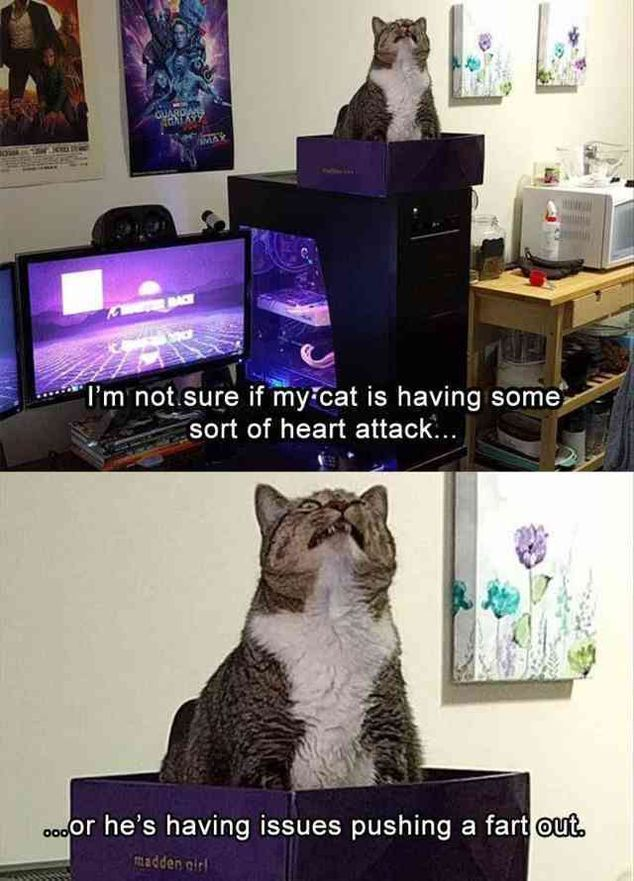 75 Funny Animal Pictures #CatFunny