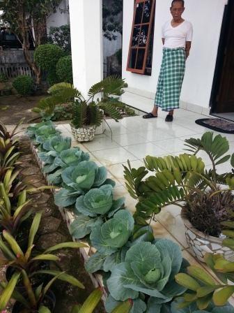 Menanam sayuran di teras rumah
