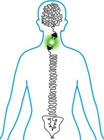 """""""Ninety percent of the stimulation and nutrition to the brain is generated by the movement of the spine.""""  -Dr. Roger Sperry"""