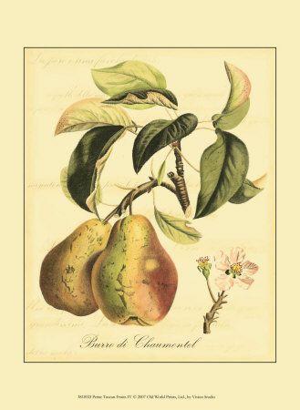 Botanische illustratie Posters bij AllPosters.nl